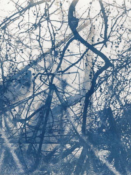 #cyanotype #aviary #toned #alternativeprocess