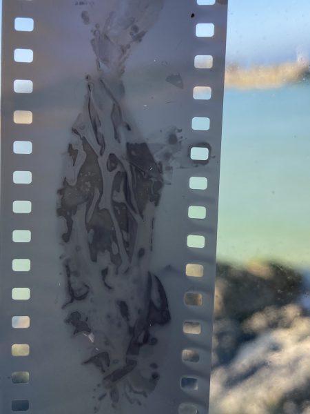 #phytogram # seaweed #cornwall #milenamichalski